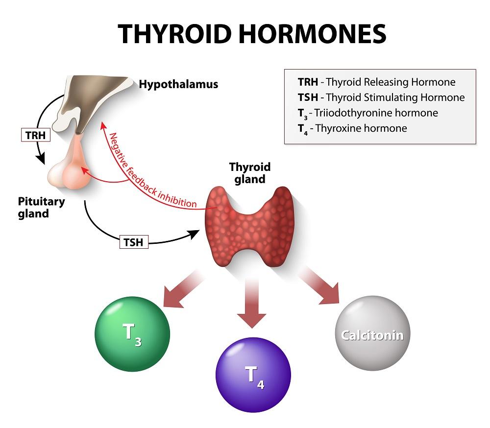 Thyroid Parathyroid - Patient Education Website
