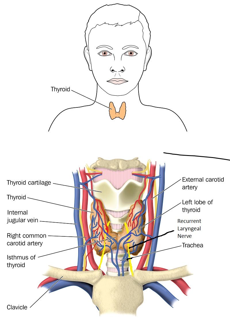 Thyroid Parathyroid - Patient Education Website